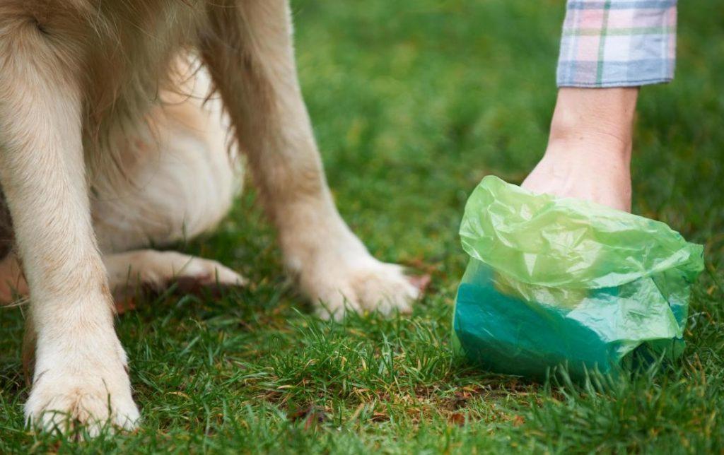 Dueño recogiendo los excrementos de su perro con una bolsa