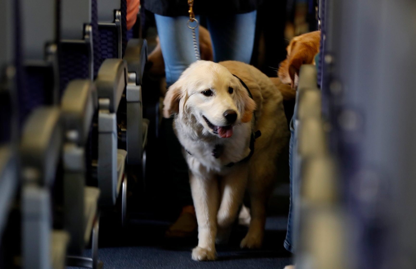 Perro en la cabina de un avión que permite volar a tu mascota