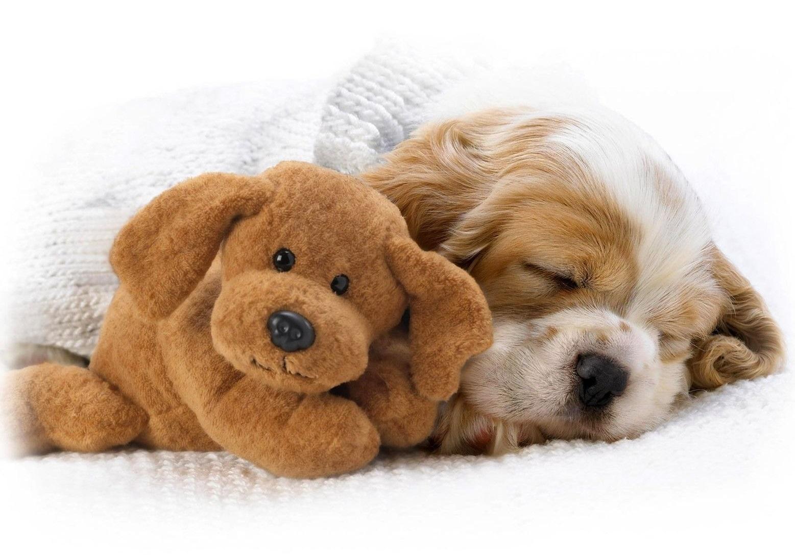 Foto de un cachorro durmiendo tranquilamente junto a un juguete