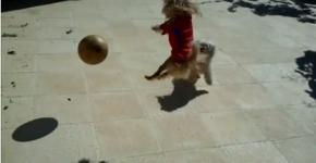 Perro jugando al futbol