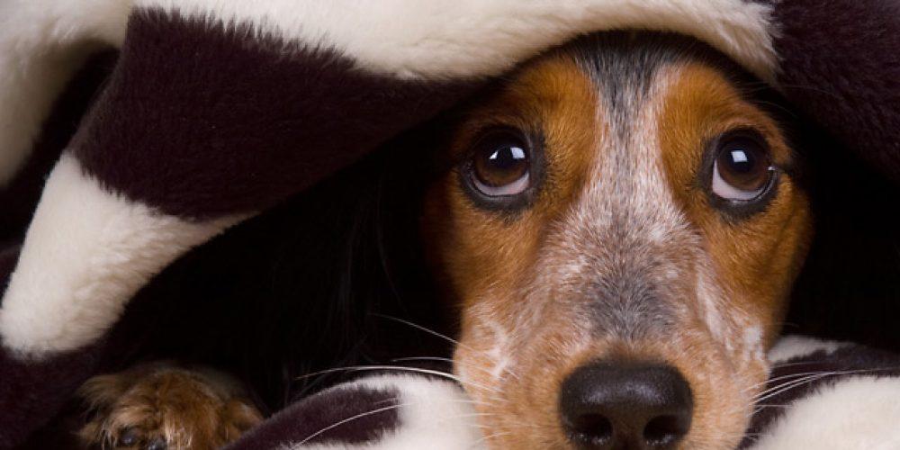 El miedo de los perros a los cohetes: Uno de los grandes problemas en las fiestas