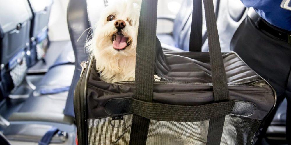 Foto del perro en el asiento dentro del trasportín preparado para viajar en avión