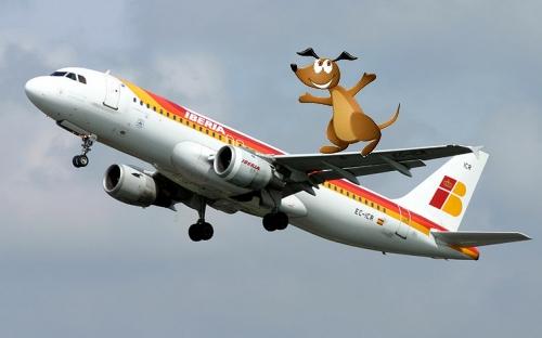 Avion de Iberia con perro