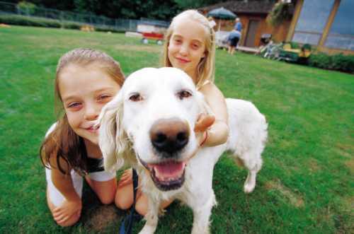 Los Perros Ayudan a Prevenir Enfermedades