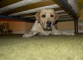 Perro escondido