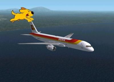 Iberia Admite Perros en sus Vuelos