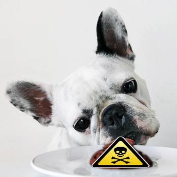 perro comiendo veneno