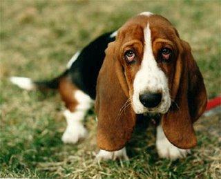 Un perro triste puede incluso llegar a morir de pena
