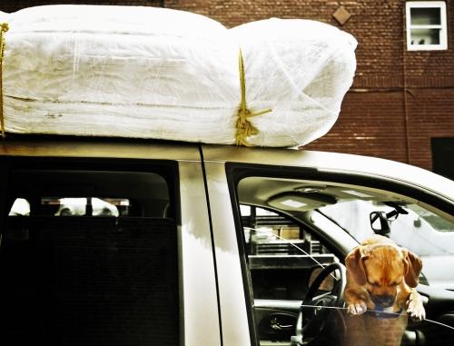 Prepara tu viaje junto a tu perro con antelación para no tener problemas de última hora