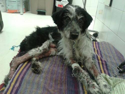 Lucio se recupera de sus graves heridas en el Centro Municipal de Protección Animal de Zaragoza