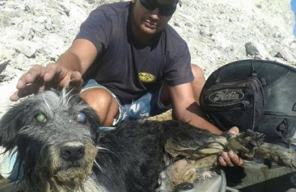 El perro fue encontrado sujeto a una roca por unos pescadores