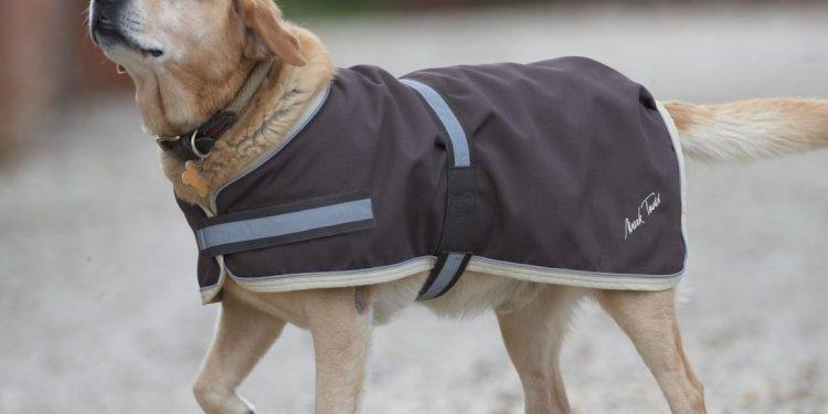 Elige el mejor abrigo para tu perro