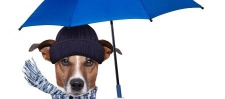 Como elegir el mejor abrigo para tu perro