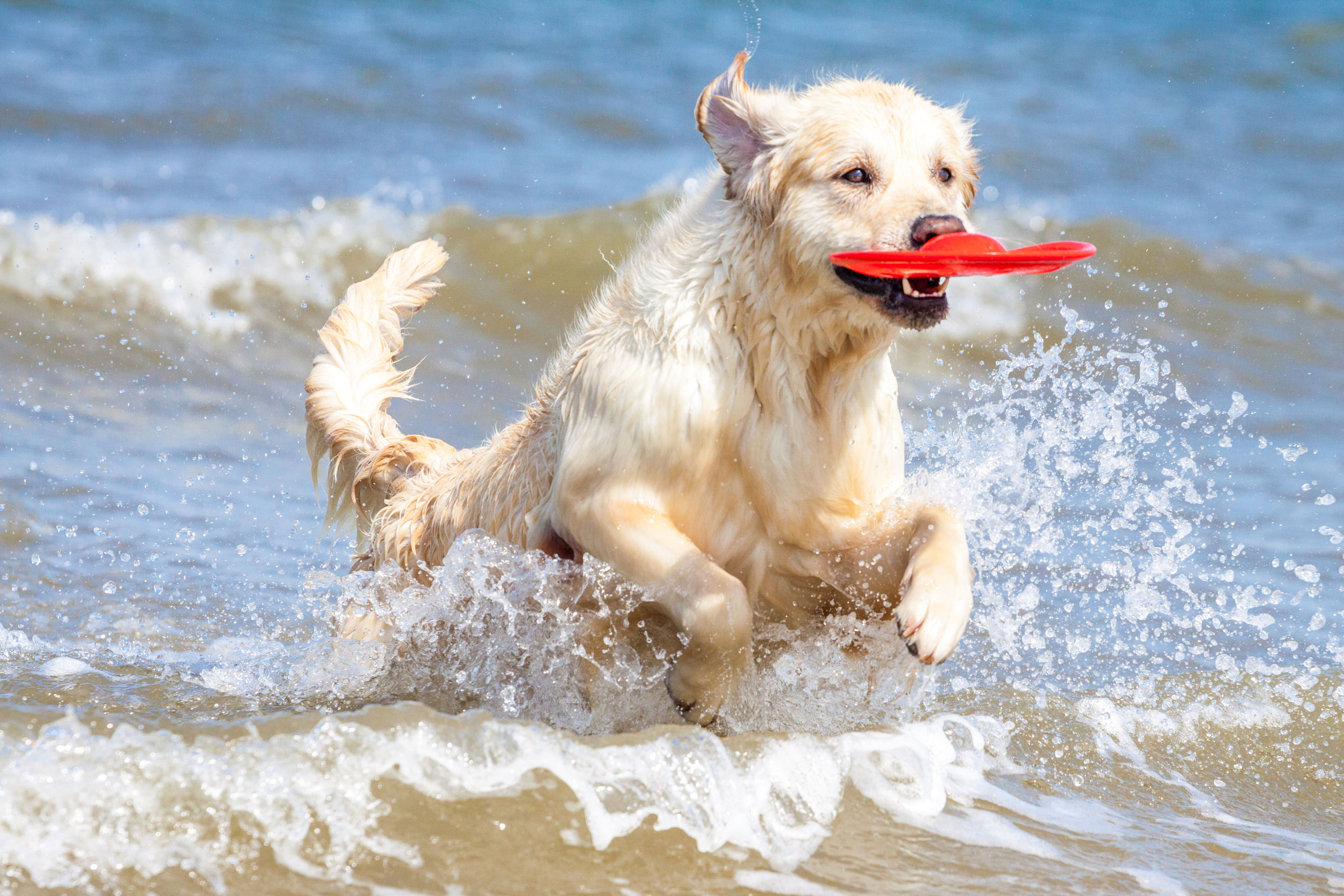 Playas para perros en barcelona for Cani al mare