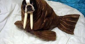 10 disfraces para perros graciosos