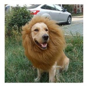 disfraz para perros de león