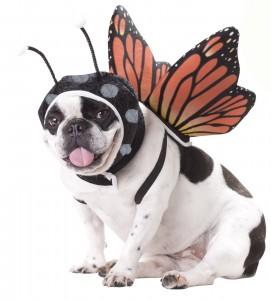 disfraz para perros de mariposa