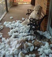 perro rompiendo un sofa