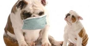 ¿ Los Perros tienen Alergias ?