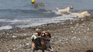 playa para perros arroyo totalan