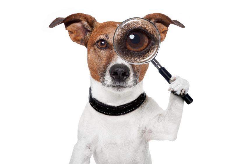 buscador de playas para perros en verano 2016