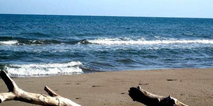 playa-para-perros-riumar