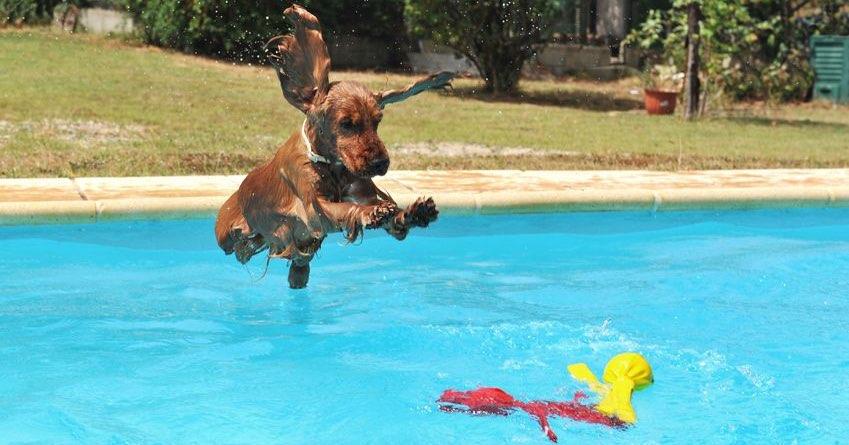 perro-en-piscina