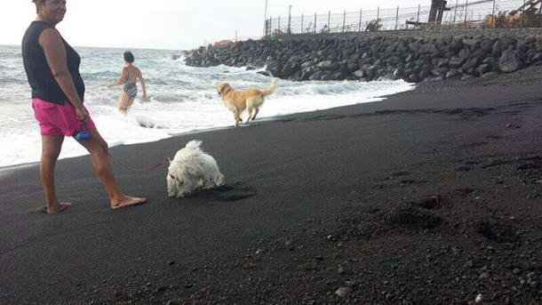playa-para-perros-el-cabezo.jpg