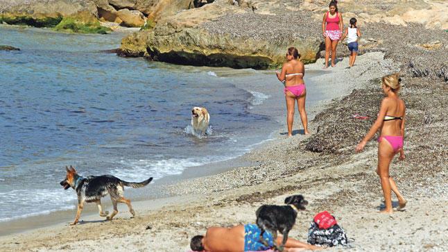 Playa de Es Carnatge para perros en Mallorca. Imagen: Diariodemallorca.es