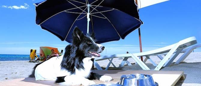Playa para Perros en Agua Amarga Alicante