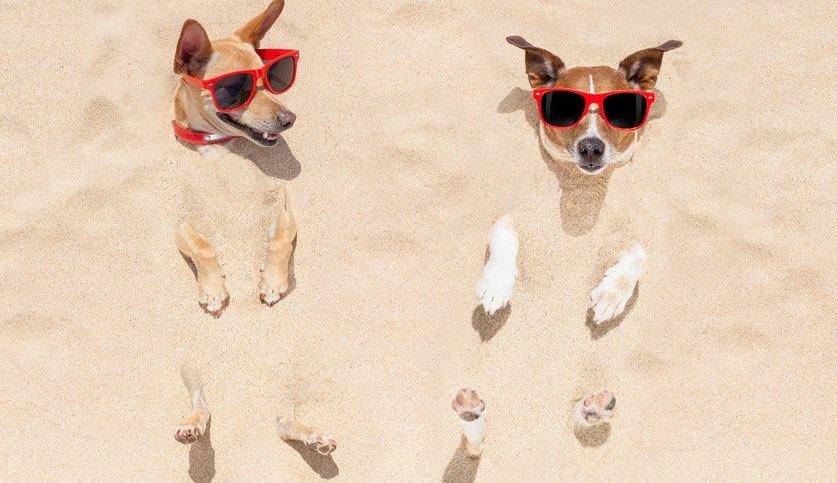 perros en las playas de Cataluña 2016
