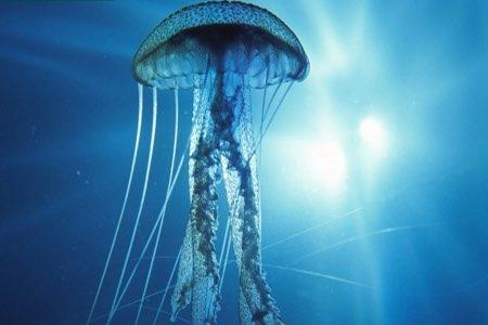 Las medusas también pueden picar a tu perro en zonas sensibles como la nariz o la barriga