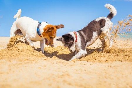 Cuidado con la arena caliente que puede quemar las almohadillas de nuestras mascotas. Ten especial cuidado con los cachorros, ya que pueden comer grandes cantidades de arena.