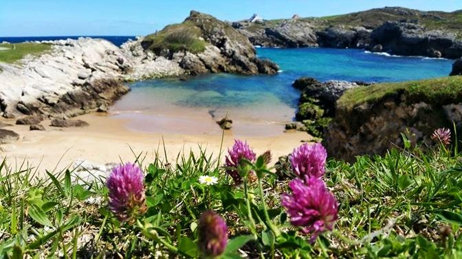 Playas Para Perros En Cantabria 2021 Listado Oficial