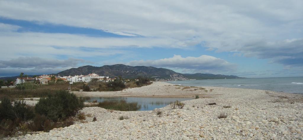 Playas para perros en la Costa de castellón