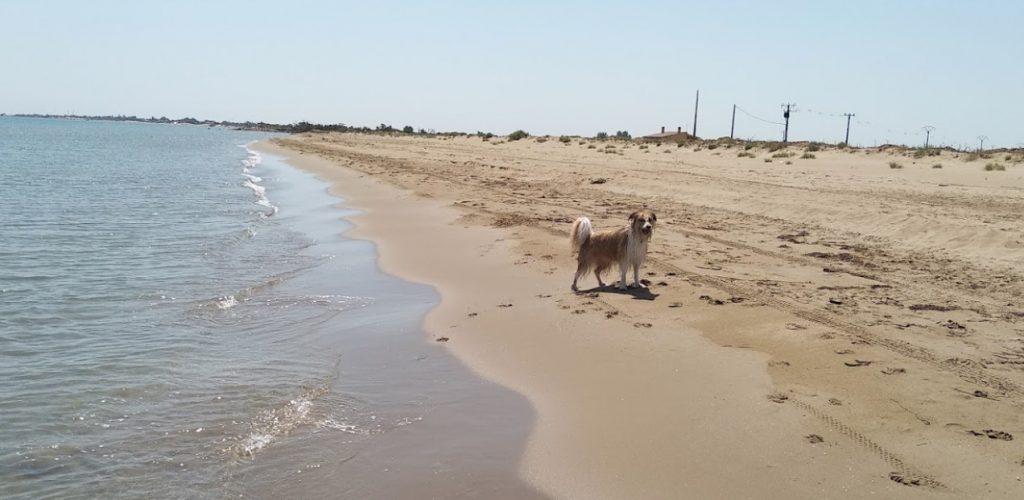 perro en la playa de Deltebre