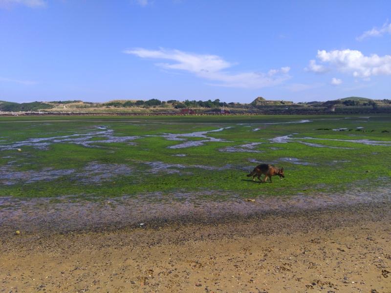 playa para perros la riberuca en bajamar