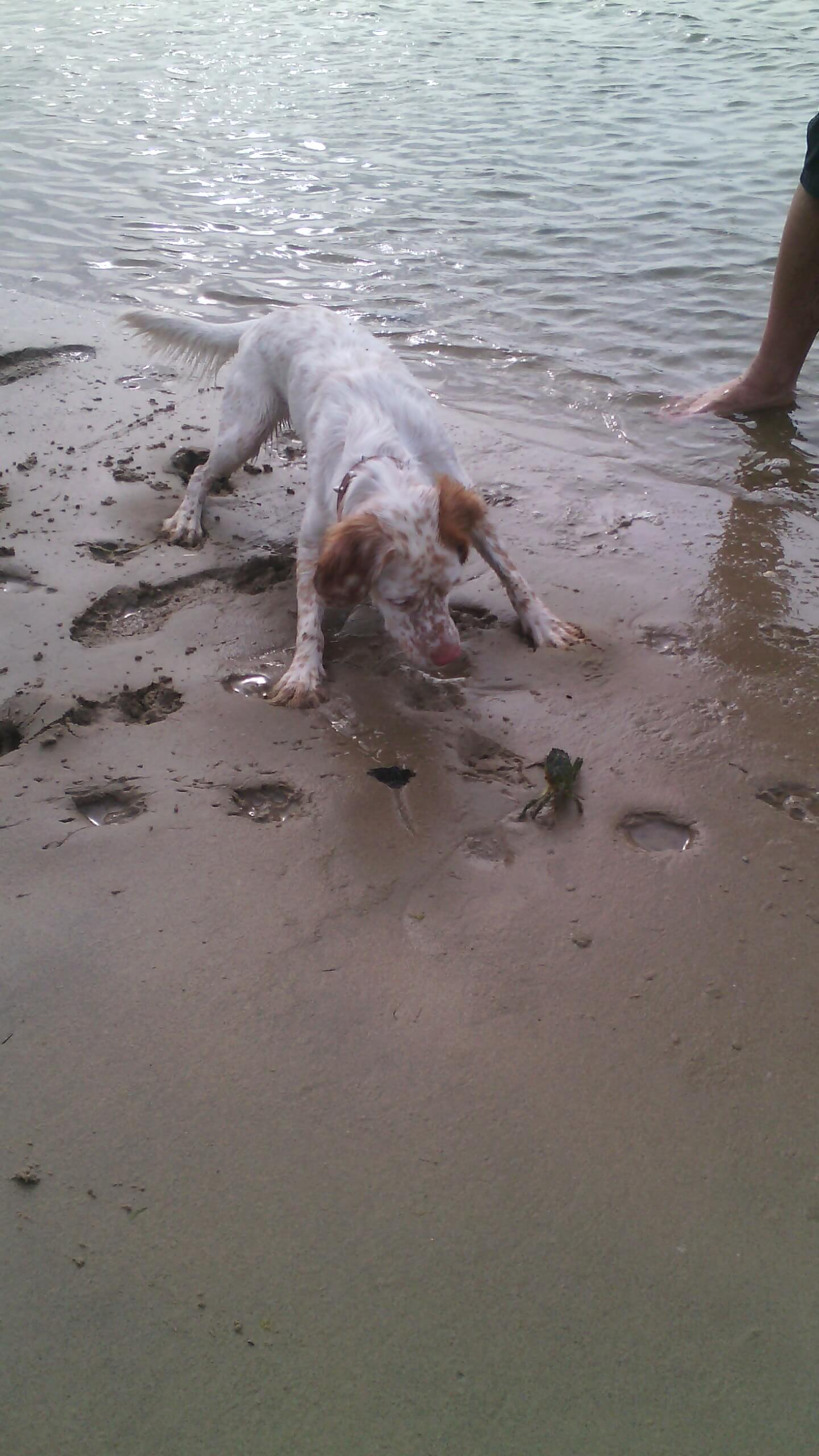 playa para perros en San Vicente de la Barquera
