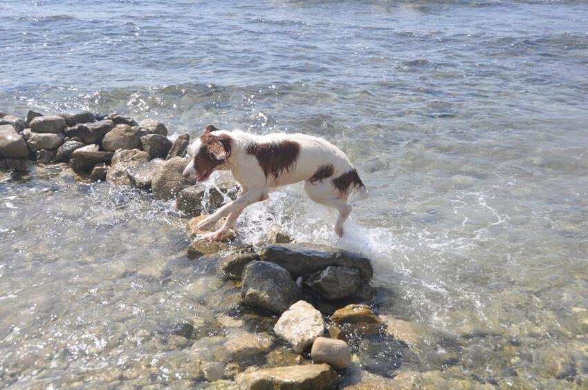 playa El Xarco para perros en Villajoyosa