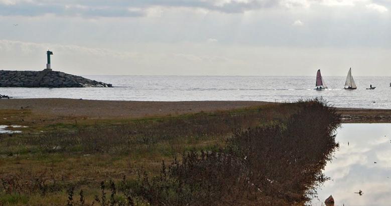 Playa para perros de la Picordia en Arenys de Mar