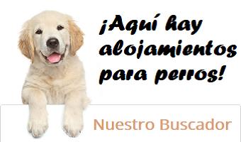 Top perro en formulario para buscar alojamientos que admiten perros