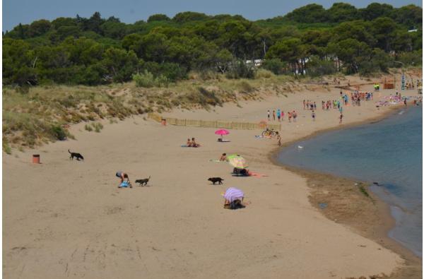 playa para perros rec del moli en Escala