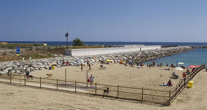 dog beach of Barcelona