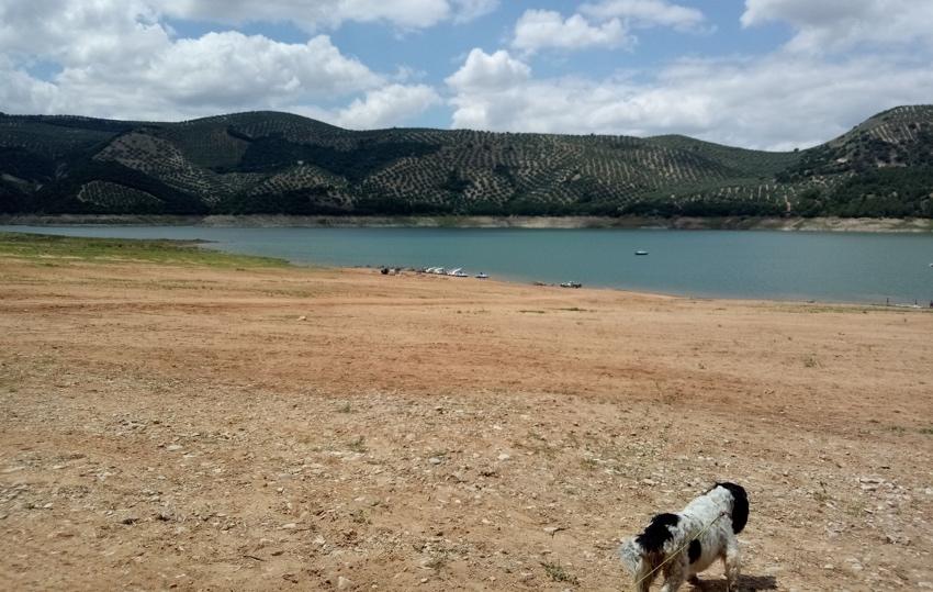 perro en la playa de valdearenas iznájar
