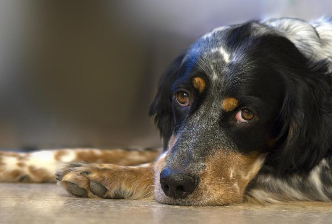 A Mi Perro Le Suena El Estómago Y Tiembla Es Grave Redcanina Es