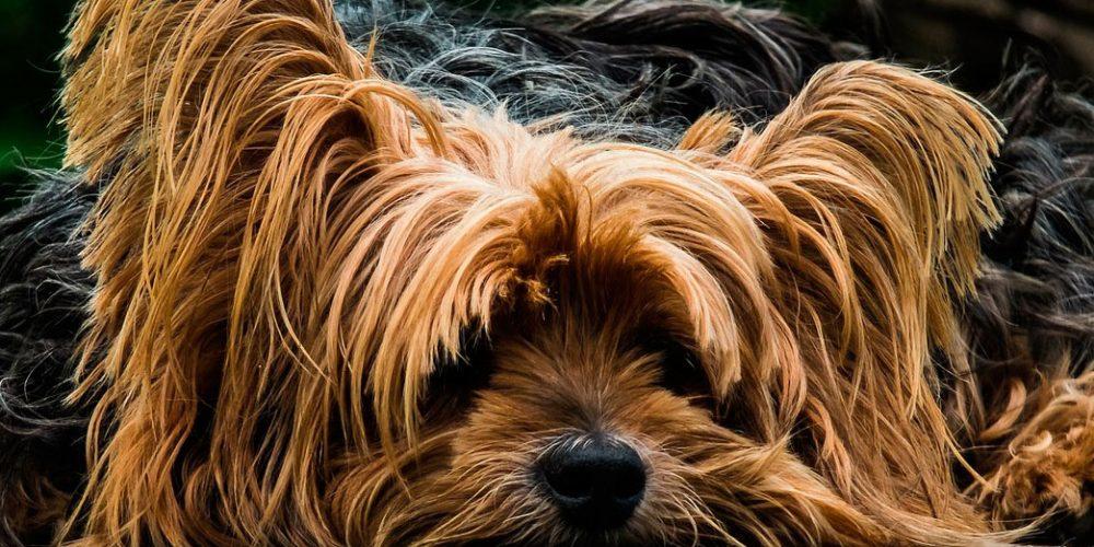 Foto de un perro débil en el suelo con problema de diarrea