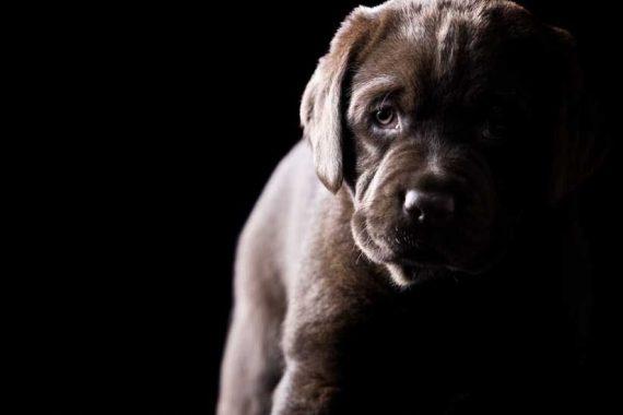 Perro con miedo a la oscuridad
