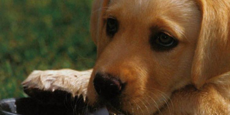 Foto de un cachorro a punto de comer