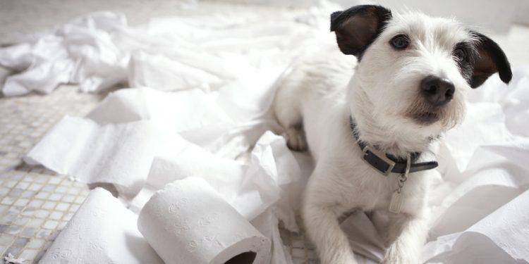 Foto de un perro sobre unos papeles higiénicos