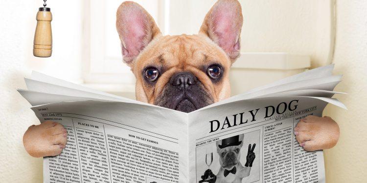 Perro sentado en el inodoro leyendo el periódico